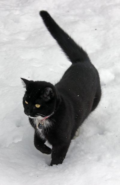 minh_snow